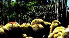Living Desert Zoo & Garden